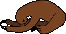 paresseux par terre
